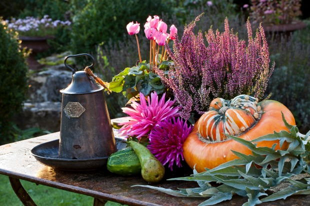 Still life in a garden in autumn